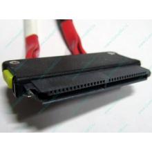 SATA-кабель для корзины HDD HP 451782-001 459190-001 для HP ML310 G5 (Евпатория)